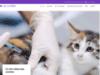 VetAtHome - Service vétérinaire 24h/24 (Brabant wallon)