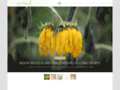 Le blog des fleurs