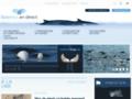 Baleine en direct