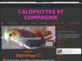 Détails : Elevage calopsittes et perruches anglaises en sud vendée