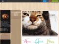 blog de chat sur chat-lou.skyrock.com
