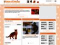 information sur les chats sur www.chatsdumonde.com