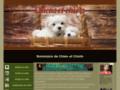 Détails : Guide d'informations sur les chiens