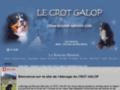 Chiot Bouvier Bernois