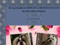 Voir la fiche détaillée : Elevage familial de Shih-tzu