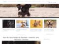 DogDog.fr - Annonces animalieres