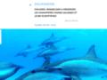 Détails : Des excursions inoubliables en mer