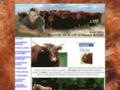 Détails : A Apchon, élevage de vaches salers et vente