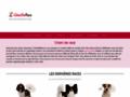 comparatif assurances sur www.entre-chien-et-nous.fr