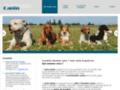 Ecole canine