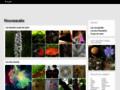 Foupix - Galerie Virtuelle - Photos