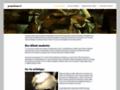 Oeuvres de Georges Braque Ile de France - Paris