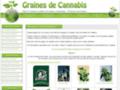 Aux graines de Cannabis