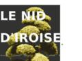 Le Nid d'Iroise