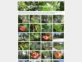 Flore tropicale, jardins et sentiers botaniques