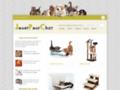 chat de compagnie sur www.jouetpourchat.fr