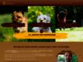 Jardin des Korrigans : Elevage, �ducation canine en Bretagne