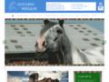 Détails : Cours d'équitation à Valenciennes (59)