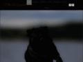 Le val de l'enchanteur �levage canin de Bouvier Bernois et Carlin