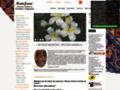 site http://www.matajava.com
