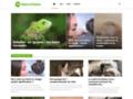 Naturopattes : médecines naturelles aux animaux