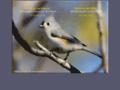 www.oiseaux.ca/