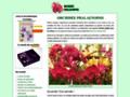 Détails : Orchidée Phalaenopsis