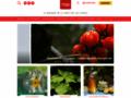 desmodium sur www.plantes-et-sante.fr