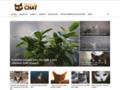 Détails : Le choix du bon arbre à chat