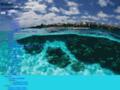 Aquariophilie récifale et marine