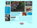 Détails : Restauration d'une Honda CB750