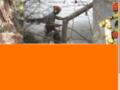 Détails : Élagage, haubanage, abattage et tailles d'abres à Montlouis - Cher (18) : Séquoia Élagage
