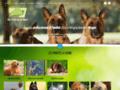 Détails : Éducation canine dans les Vosges: les raisons de dresser son chien?