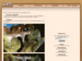 Détails : Arbres et verdure pour diorama