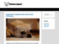 Détails : Toilettage canin à Saint Priest Lyon