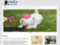 Détails : Nom de chien pour votre chiot, bien le choisir !