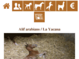 Alif Arabians