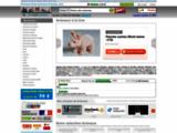 animaux-bois-animaux-bronzes.com