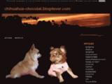 chihuahua-chocolat.blog4ever.com