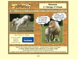 Elevage de poneys Shetland d'Utoupie