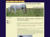 Elevage des Trèfles, poneys connemara