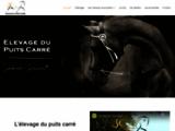 Elevage de Chevaux de Pure Race Espagnole