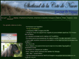 Elevage poneys shetland mini