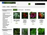 Graines et plantes Ethnoplants