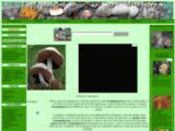 guide-champignon.com