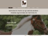 Montigny paint horse
