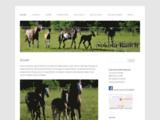 Nokota-Ranch
