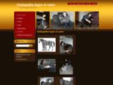 Ostéopathe équin et canin