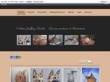Dessins, peintures, illustrations, stylo bille, pastel, huile, aquarelle, animalier, histoires enfants, les aventures de Canel le lapin, les 12 mois de l