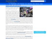 Aquarium récifal et ses animaux